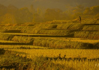 agriculture-terrace-rice-scenery-asia
