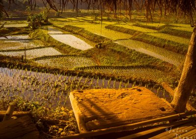 culture-terrace-rice-hut-irrigation