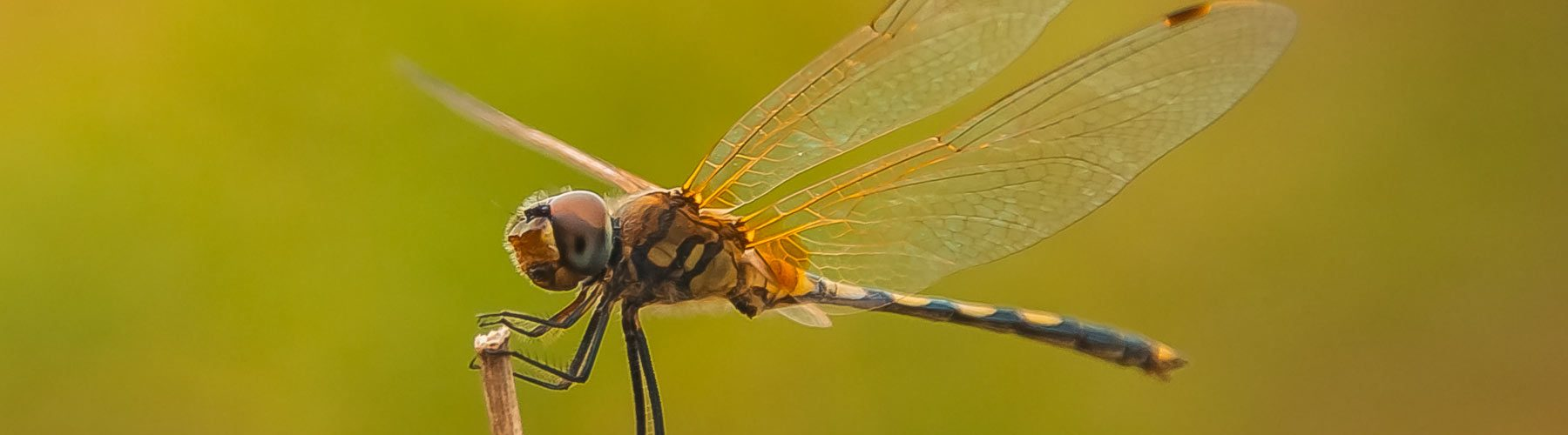 Dragonfly in Laos. Photography by Julien Thomas.