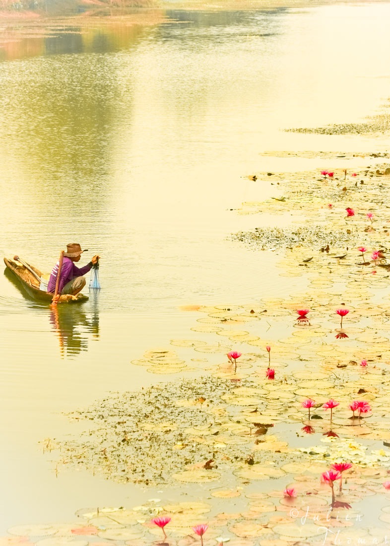 Thai man fishing on a small boat with a fish net on a river with water lilies flowers and nenuphar in Thailand, Sisaket Province. Photography by Julien Thomas.