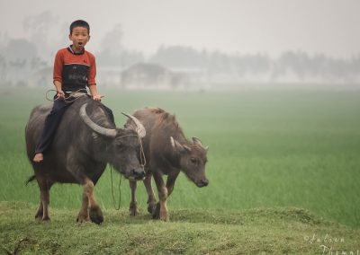 morning-child-buffalo-amazed-mist