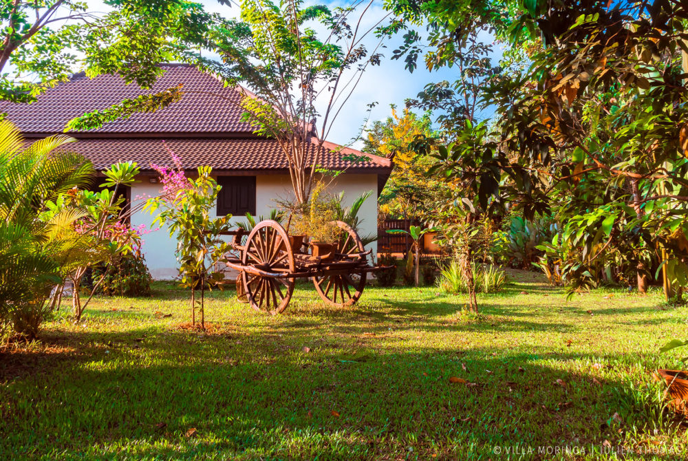 Large blooming garden with asian ox cart in a villa, house, home to rent in Villa Moringa, Siem Reap - Cambodia.